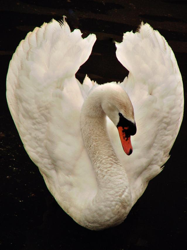 Легенда о Белой Птице